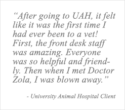 Pet Heath Certificates |USDA Health Certificates for Travel