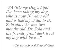 NYC Veterinarians   Meet Our Team of New York Pet Doctors